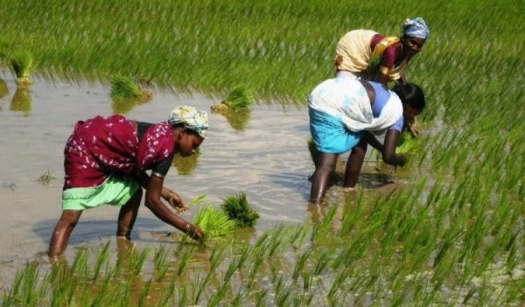 মোদী সরকারের 'কৃষক প্রীতি'